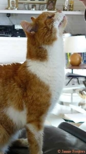 Katten-Pink-fik-Bach-draaber-mod-traumer-og-misrøgt