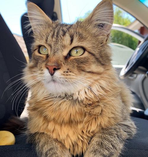 Katten Tarzan -en kat med 9 liv